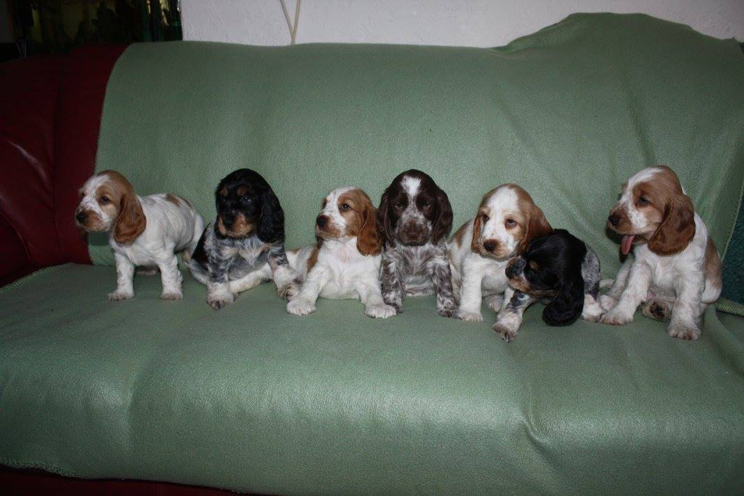 alle pups_